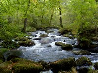 30 Days Wild: River Bovey near Bovey Tracey