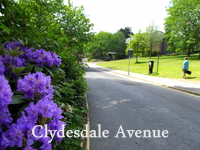 Clydesdale Ave