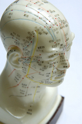 Model showing the acupuncture meridians of the head, which are important in acupuncture treatment for headaches and migraine.