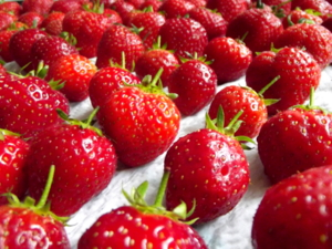 Strawberries grown at Robin's acupuncture clinic, Exeter
