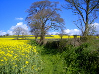 Looking after ourselves in spring: field near Crediton
