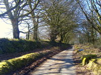 Winter lane near Chagford