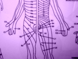 Acupuncture for radicular pain patterns.