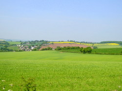Devon pasture: evidence supports acupuncture for hay fever.