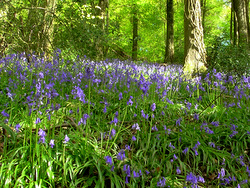 Acupuncture in Exeter: two hours per week in nature helps health & wellbeing.