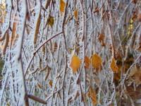 Winter health tips: Winter birch near Crediton