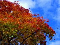 Autumn health tips: Autumn Tree Crediton